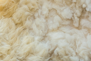 Animal background view. Close up to White Sheep's fluffy wool on background. Wall mural