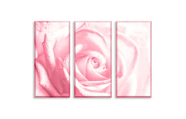 Canvas wall art decor. Three pieces set with beautiful pink rose print with soft blurred effect, isolated on white wall