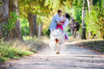 A young couple goes for a walk with the dog and has a lot of fun