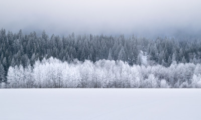 Winter Wonderland Forest: Evergreen Trees on Snow-covered Hillside - Washington, USA