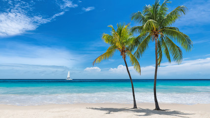 Poster Beach Paradise beach with palm trees and sailboat in tropical sea in Key West, Florida
