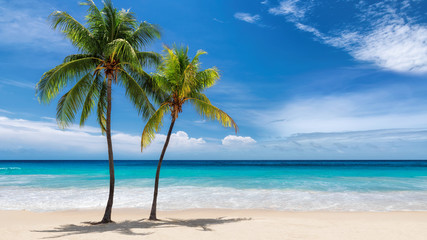 Foto op Canvas Palm boom Paradise beach. Sunny beach with palm and turquoise sea. Summer vacation and tropical beach concept.