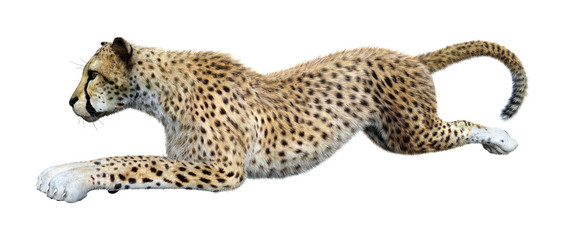 3D Rendering Big Cat Cheetah on White Wall mural