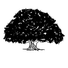 Black and white drawing of an ash tree silhouette of a sprawling crown tree. Vector illustration