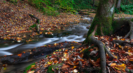 In de dag Bos rivier little river in the forest of bad urach in autumn with a tree and leaves on the ground