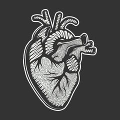 Vector hand dra style illustration for posters, decoration and print. Drawn sketch of anatomical heart in monochrome isolated on white background. Detailed vintage woodcut style drawing. Graphic.