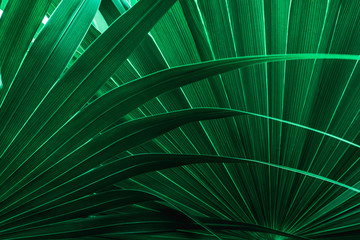 Fotomurales - tropical palm leaf and shadow, abstract natural green background, dark blue tone