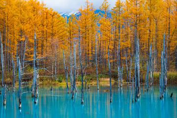 Fototapeta 晩秋の青い池 obraz