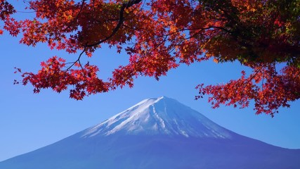 Fototapete - Mountain fuji with red maple in Autumn, Kawaguchiko Lake, Japan