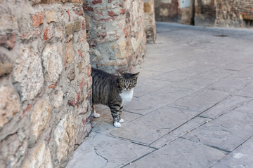 Cat entering the streets of small town in Italy from an alley