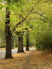 Obraz drzewa jesienia - fototapety do salonu