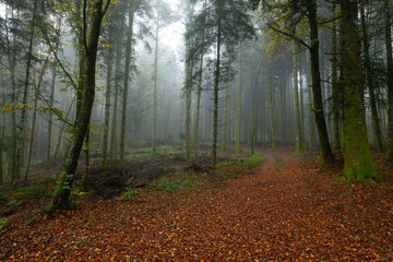 Photo Stands Road in forest un chemin forestier tapis de feuille morte rouge