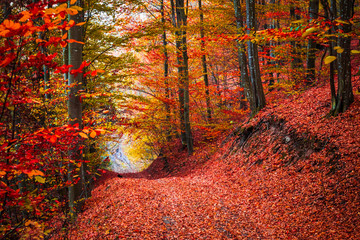 Autumn forest scenery with beautiful colors. Forest footpath covered with fallen leaves.