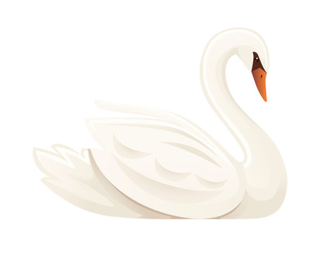 White swan largest flying bird swim on water cartoon animal design flat vector illustration isolated on white background