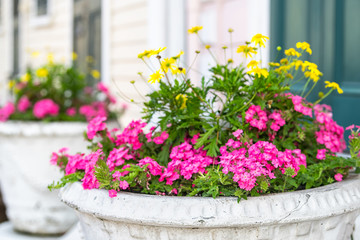 Closeup of bright decorations on doorsteps front porch in New Orleans, Louisiana with colorful pink yellow flowers potted plants and shutter door architecture