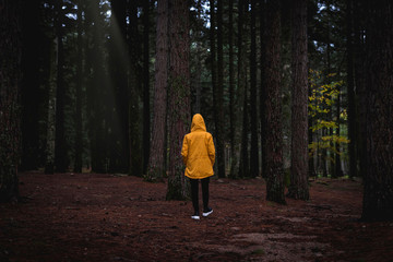 Woman with yellow jacket walking in the shadowy forest of Limbara mountain, Olbia-Tempio, Sardinia