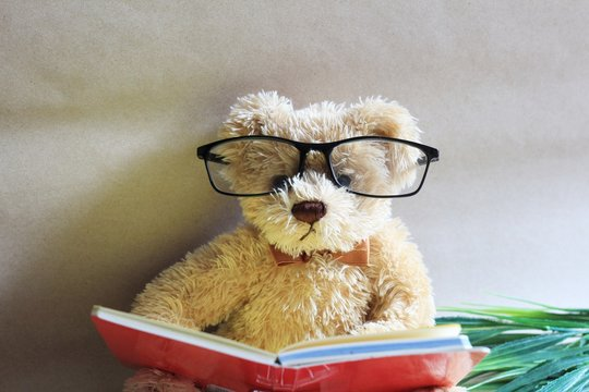a lovely wearing glasses teddy is reading a book
