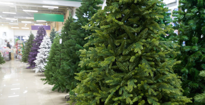 Sale of many artificial Christmas trees in green, purple and white at a decor store. The sale of a variety of artificial Christmas trees
