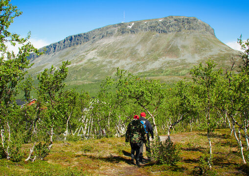 Two hikers going to the Saana fells in Kilpisjarvi, Finnish Lapland, Finland. Sunny summer scene with dwarf birches and beautiful mountain view.