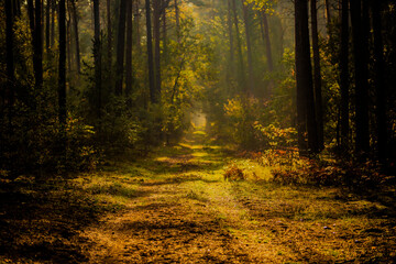 Wall Murals Forest Forest road in autumn , with sunlight