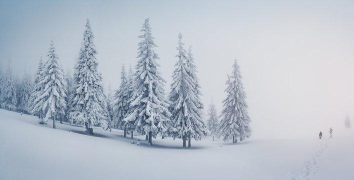 Scenic image of fairy-tale woodland. Location Carpathian, Ukraine, Europe.