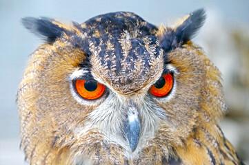 Vintage photo of owl