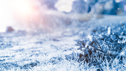 Winter snow background, blue color, snowflakes, sunlight, macro. Winter frosty morning. Frozen grass under the snow, snowflakes and sunlight, rays. Blurred background.