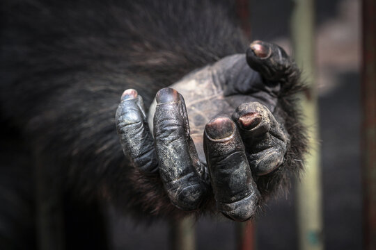 chimp hand hope for help and freedom