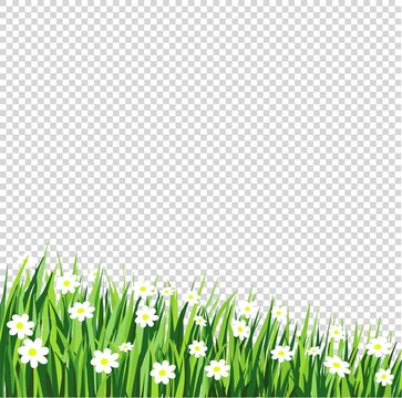 vector row of grass with white flowers on transparent background, cartoon design