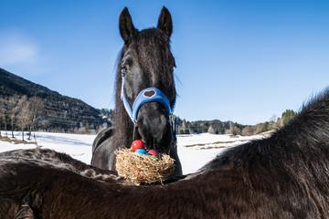 Osternest mit Pferde