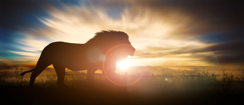 African landscape at sunset with silhouette of a big adult lion