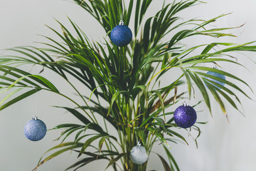 alternative Christmas tree palm plant with Christmas baubles for the festive season in summer for the Southern Hemisphere
