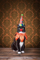 Black and white tuxedo cat dressed as a clown on an ornate background