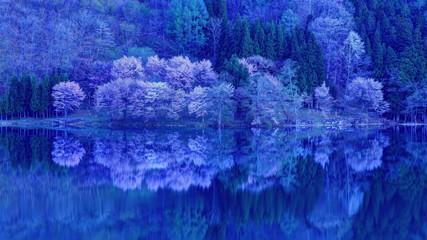 Photo sur Aluminium Bleu fonce 中綱湖の夜明けとオオヤマザクラ