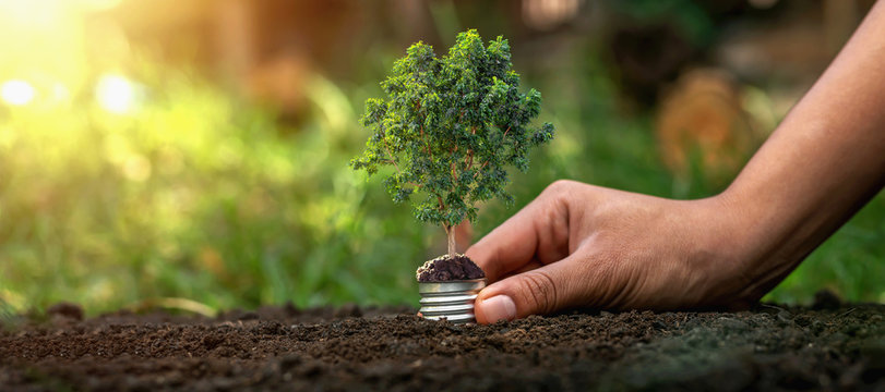 Holding a light bulb on a green tree on the background, natural energy saving concept