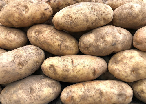 Close up on pile of Russet Potatoes, also known as Idaho potatoes in the U.S.. Ideal for baking, mashing, and making french fries.