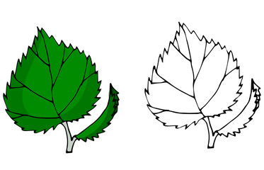 birch leaf.Autumn leaves vector flat silhouettes set isolated on white background.