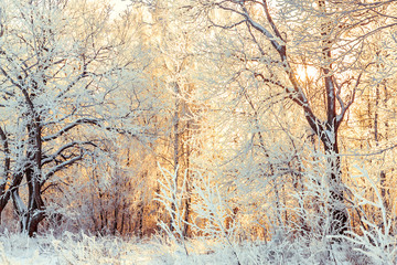 Wall Murals Beige snowy winter landscape with forest and sun