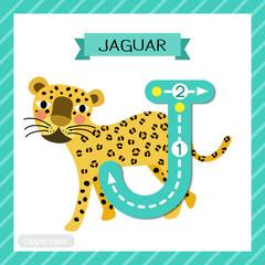 Letter J uppercase tracing. Walking Jaguar