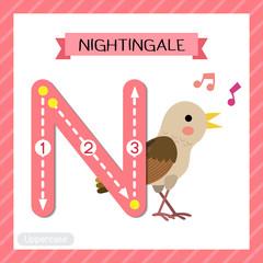 Letter N uppercase tracing. Singing Nightingale bird
