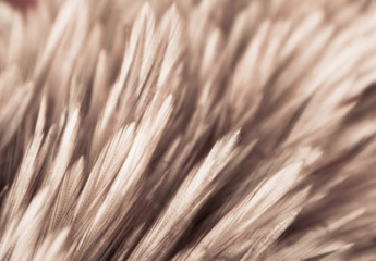 Beautiful abstract white gray and brown feathers on dark background and colorful soft brown white feather texture on white pattern Wall mural