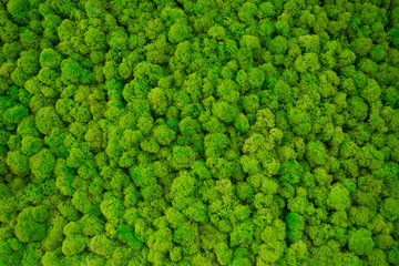 Obraz decorative moss for interior decoration. - fototapety do salonu