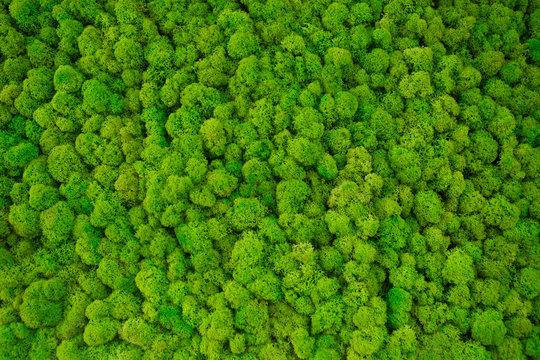 decorative moss for interior decoration.
