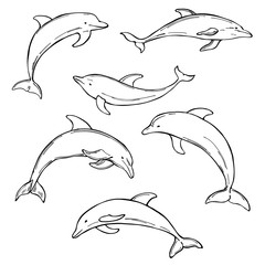 Hand drawn dolphins on white background. Vector  sketch illustration