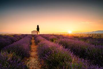 das kleine Haus im Lavendelfeld