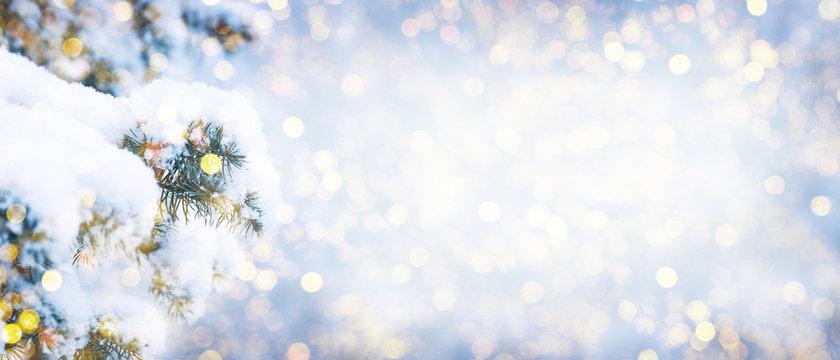 Winter fir tree christmas scene with sunlight.
