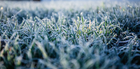 Türaufkleber Gras Morning dew froze on a green grass lawn and turned it into a white blanket