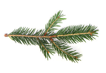 Fir Tree Branch, Pine Tree Branch isolated on white Background