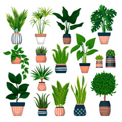 Home plants in pots, isolated on white background. Vector flat cartoon illustration of green potted houseplants