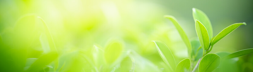 Foto op Aluminium Natuur Beautiful nature view of green leaf on blurred greenery background under sunlight with bokeh and copy space using as background natural plants landscape, ecology cover page concept.